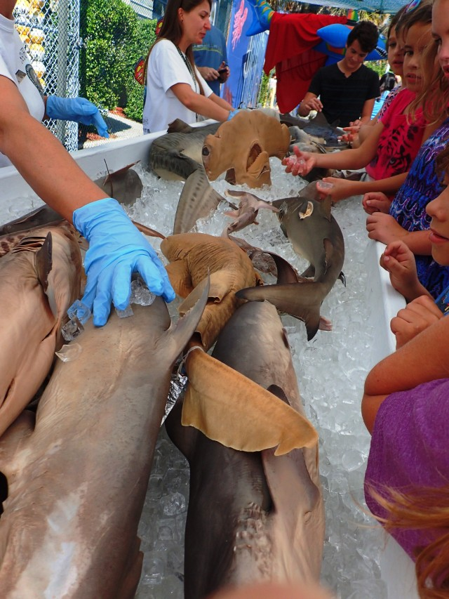 hands on shark exhibit and display at MarineQuest, St Petersburg, Florida, the greener bench blog
