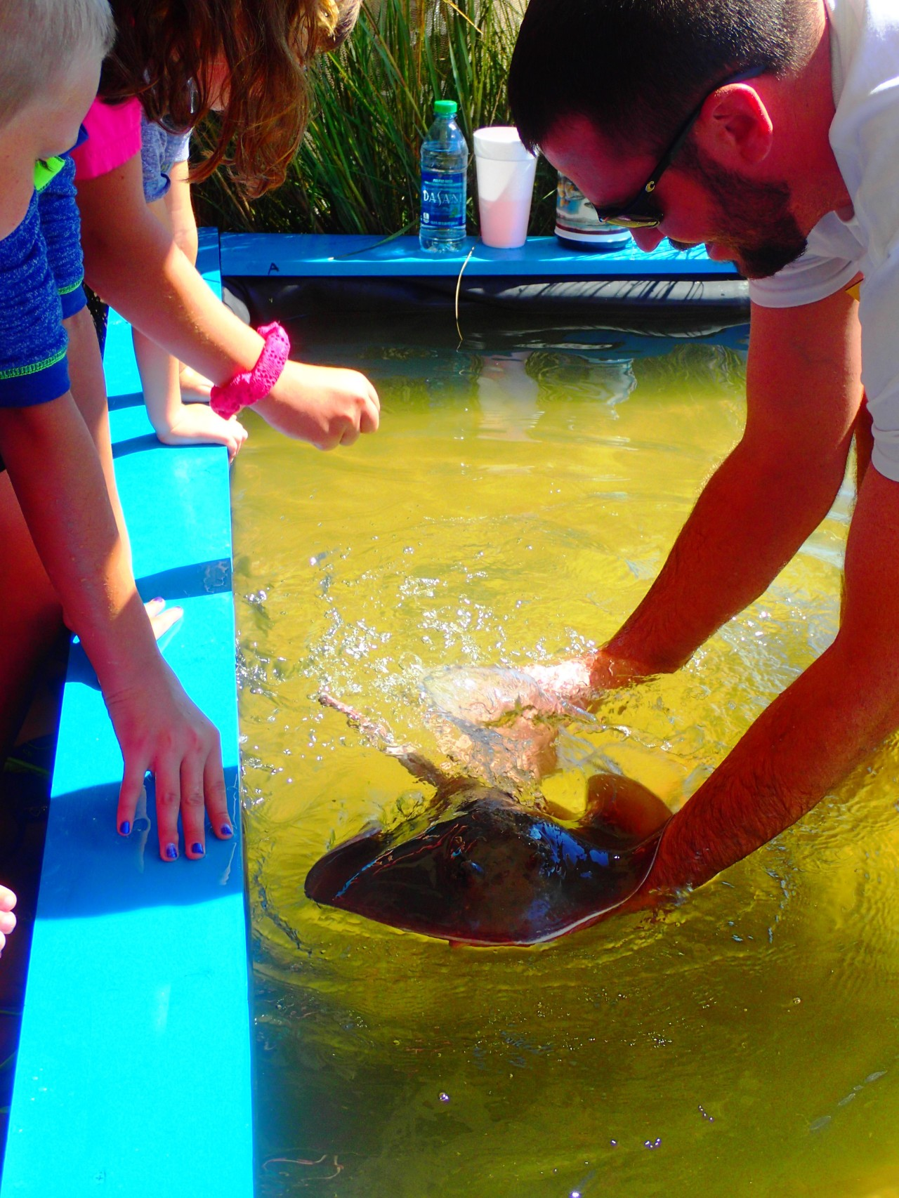 biologist holding stingray in touch tank at MarineQuest, St Petersburg, Florida, the greener bench blog