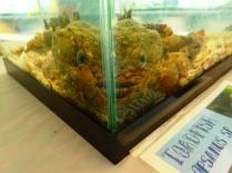 toadfish in corner of tank, MarineQuest, St Petersburg, Florida, the greener bench blog