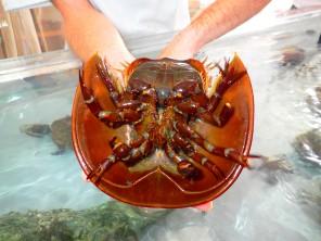 underside of Horseshoe crab, MarineQuest, St Petersburg, Florida, the greener bench blog