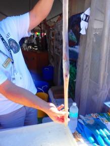 long narrow fish, MarineQuest, St Petersburg, Florida, the greener bench blog