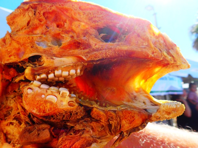 cross section of pharyngeal teeth on fish, MarineQuest, St Petersburg, the greener bench blog