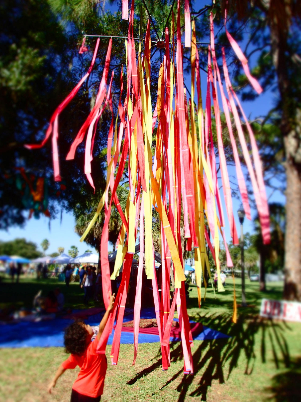 beautiful streamers, circus mcgurkis, st Petersburg, florida, the greener bench blog