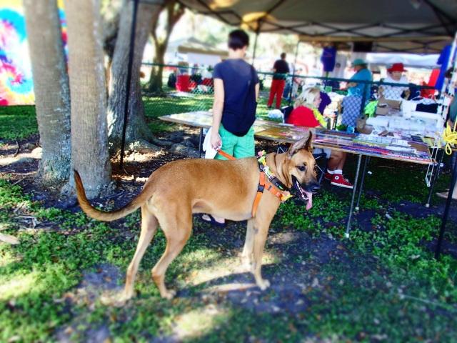big dog, circus mcgurkis, st Petersburg, florida, the greener bench blog