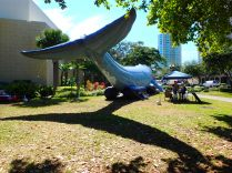shadow of the inflatable whale tail, blue ocean film festival, st Petersburg, florida, the greener bench blog