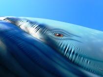 inflatable whale's eye, blue ocean film festival, st Petersburg, florida, the greener bench blog
