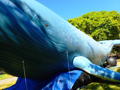 school kids walking past inflatable whale, blue ocean film festival, st Petersburg, florida, the greener bench blog, great whale conservancy