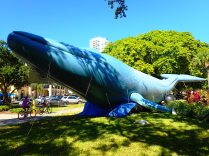 bicyclists past inflatable whale, blue ocean film festival, st Petersburg, florida, the greener bench blog